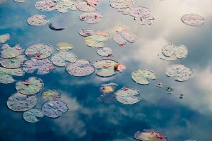 Self-Care Habits - Water Lily Pond